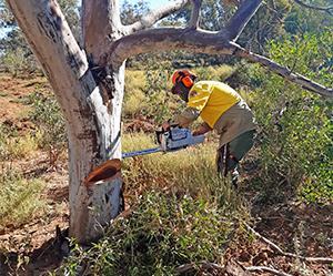 TAFE NSW helps National Parks & Wildlife Service upskill ahead of bushfire season