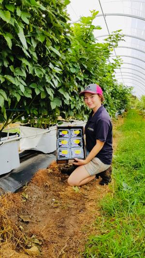 TAFE NSW delivers training to Costa Group to boost innovative crop production practices