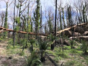 TAFE Digital bush regeneration course offers lifeline to bushfire-hit communities