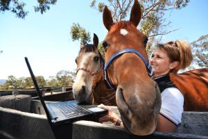 Biosecurity and animal welfare skills give TAFE NSW performance horse students an edge