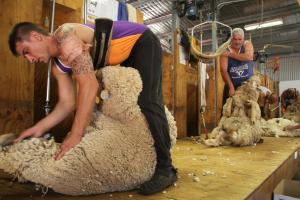 New course to help clip shearer shortage at Hay