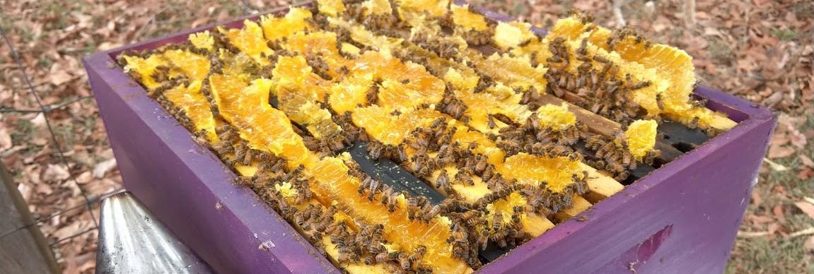 TAFE NSW Wollongbar to be the new honey hub